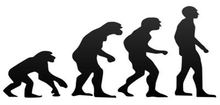 الإنسان والقرد