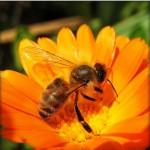 حياة النحل.. إبداعٌ يفوق تصور البشر