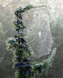 العنكبوت