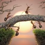 في مملكة النمل.. قدرات عقلية خارقة! (1-2)