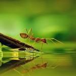 في مملكة النمل.. قدرات عقلية خارقة! (2-2)