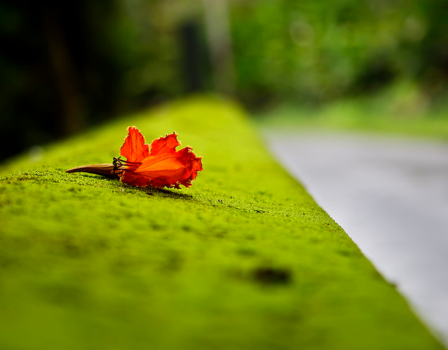 زهرة على الطريق