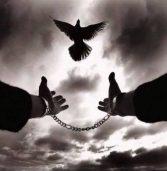 ويضرب الله الأمثال.. مثل الحُرِّ والمملوك ج 6