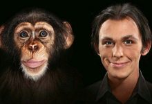 نظرية التطور