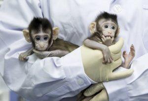 القردة