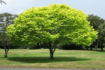 السدر.. مكانة مرموقة بين أشجار الجنة!